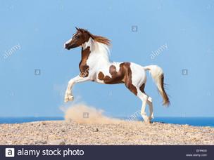 Horse Birthdays: December