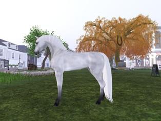 Horse'n Stuff - Skins