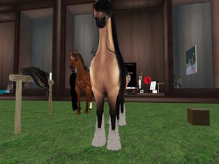 Magic Unlimited - Public Horse Rezzers