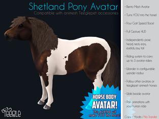 Teegle - Shetland Pony Avatar