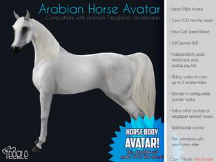 Teegle - Arabian Horse Avatar