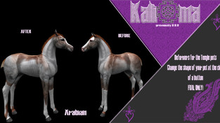 Kali [*] Ma - TeeglepetFoal Deformer Arabian