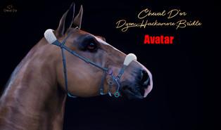 Cheval D'or - Dyon Hackamore Bridle
