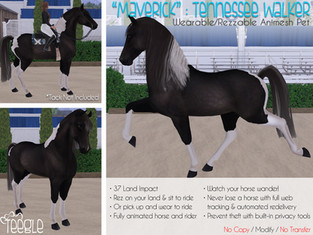 """Maverick"" the Tennessee Walker Horse"