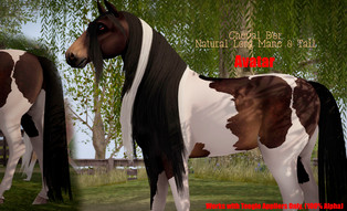 Cheval D'or - Long Natural Mane & Tail