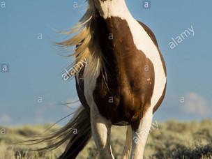 Small Update: New Market Horses & Purebreds