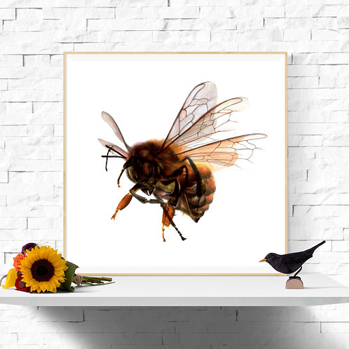 Squadron Leader Bee Instant Art Printable 11 x 11 inch