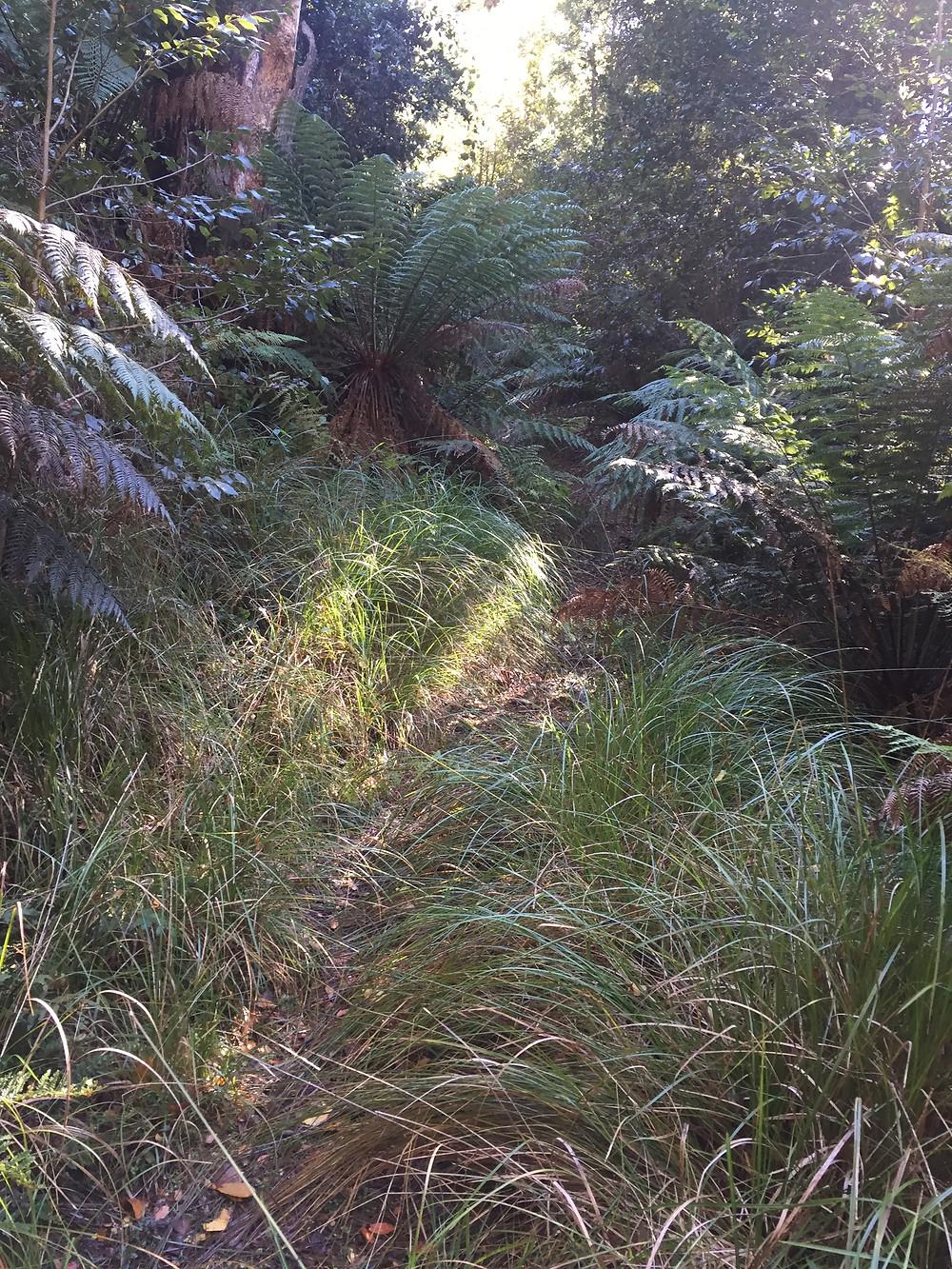 Link Track [hiking] Barrington Tops