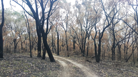 Some of the burnt trails from the Yuraigur NP section of Terra Australis in October 2019.