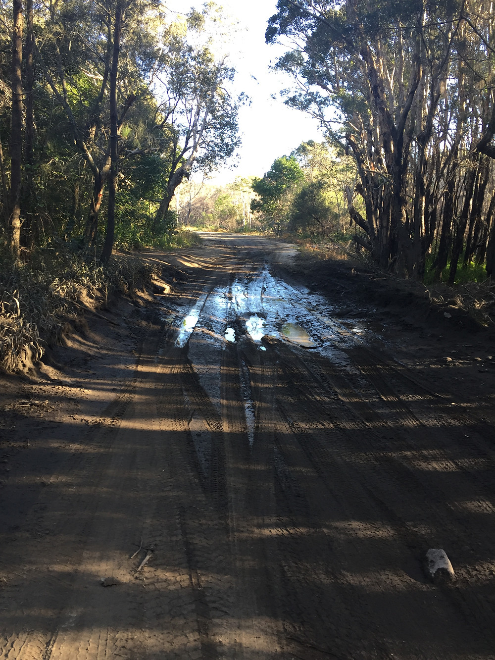 NP unmaintained service road towards Port Macquarie