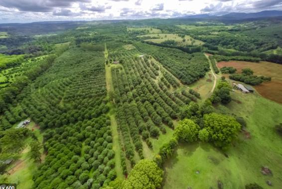 Macadamia and Avacado Plantations