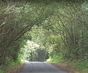 Road down to The Channon