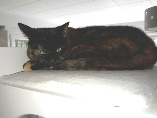 Kitty née le 24 Décembre 2012