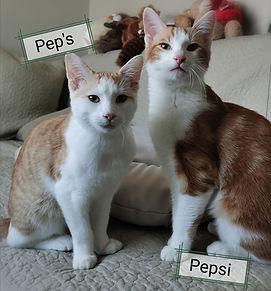 Pep's et Pepsi  2.jpg