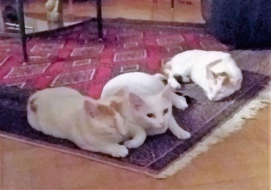 Muzette, Hansel & Gretel