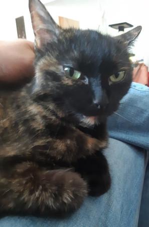 Fiona né en 2011