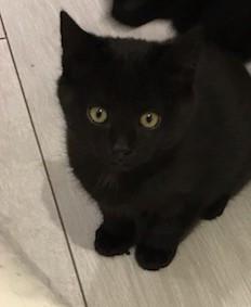 Zorro né en Septembre 2019
