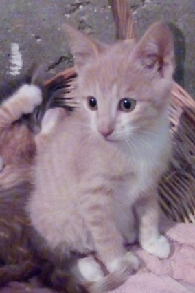 Papouf né en Juillet 2019