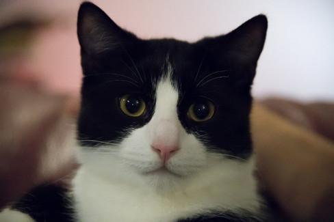 Felix né en Juillet 2017