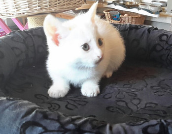 Paquita née en 2018
