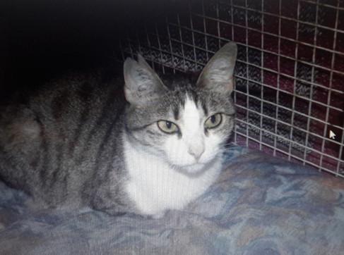 Mirabelle née en 2008