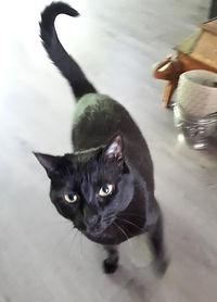 Miosine  Kitty visite du 27.4 (1).jpeg
