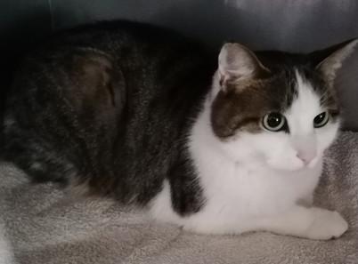 SHIVA née en 2019