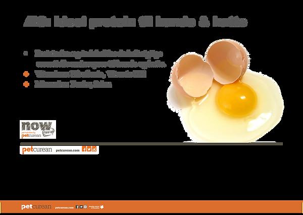 æg.png