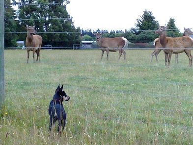 Taz++and+Deer.jpg