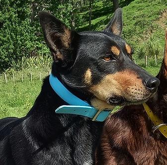 Faye & Trix Nov 20 - Copy.jpg