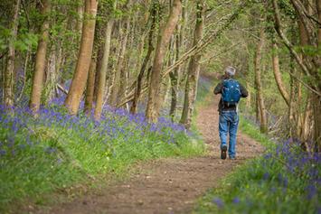 Sapperton Bluebells - Gloucestershire