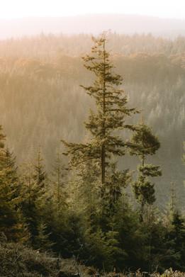 Forest Views - Quantock Hills Somerset -
