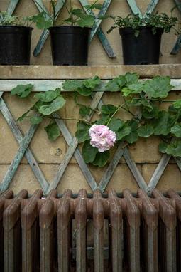 Badminton House Gardens - Gloucestershire - September 2020 - Casper Farrell-1-14.jpg