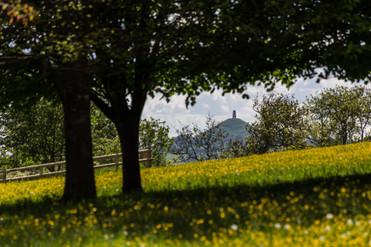 Glastonbury Tor Meadow, Somerset, UK