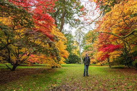 Westonbirt Arboretum - Glos (2).jpg
