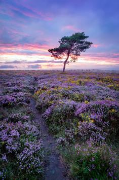Crowcombe Lone Tree - Quantocks.jpg
