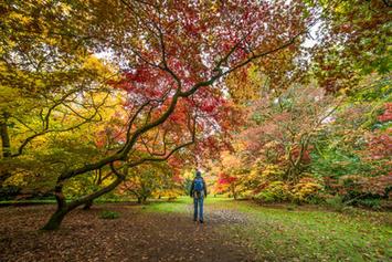 Westonbirt Arboretum - Glos (1).jpg