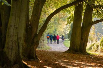 Bath Syline Walk - Autumn.jpg