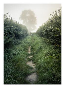 Fog Path - Wiltshire - August 2019 - Cas