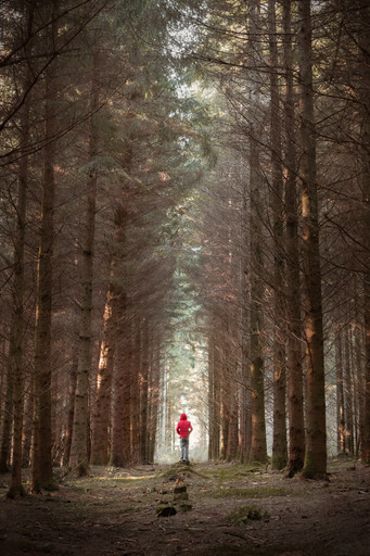 Longleat Forest - Wiltshire - November 2