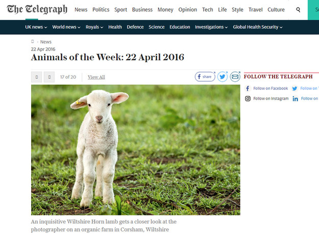 The Telegraph - Animals of the Week.jpg