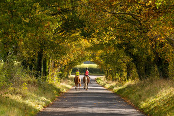 Wiltshire Avenue Autumn.jpg