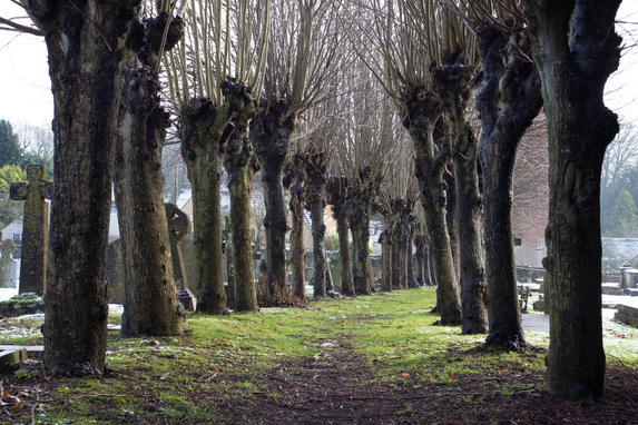 Minchinhampton Graveyard - Gloucestershi