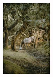Pony - Quantock Hills Somerset - October