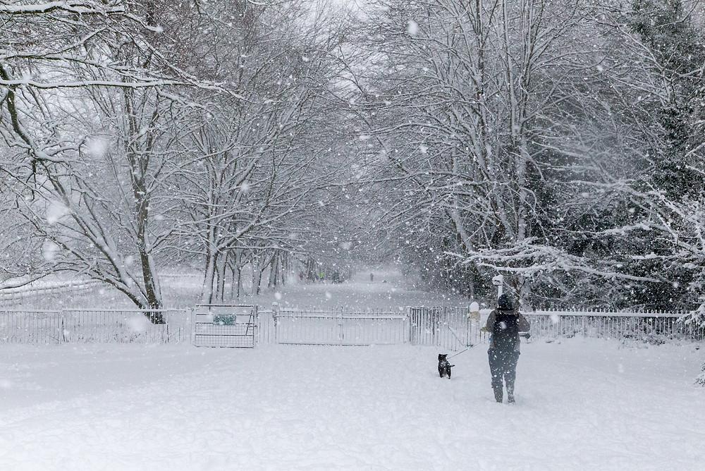 Corsham Park transformed into a winter scene from Narnia