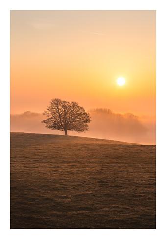 Avenue Tree Dawn Sunrise - Wiltshire - F