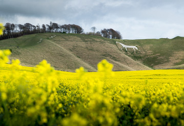 Cherhill White Horse, Wiltshire UK