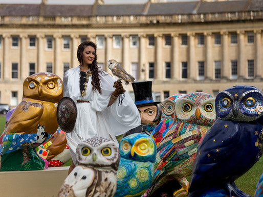 Minerva's Owls of Bath 2018 - See the new flock