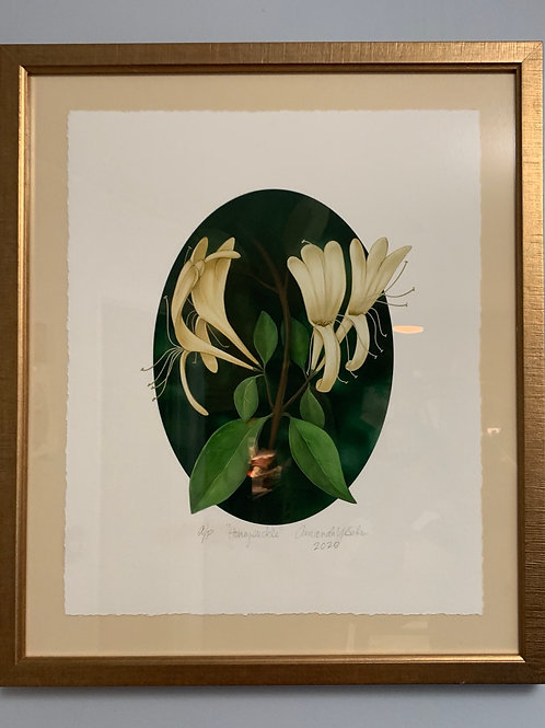 Honeysuckle Signed Limited Edition Print