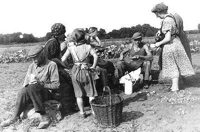 Heimatfreune Born - Landwirtschaft in Born